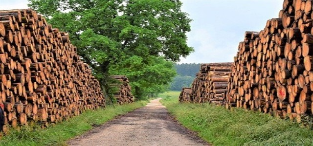 Supply of timber falls short due to high post-lockdown demand